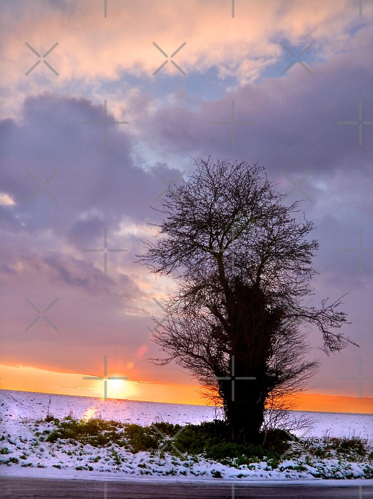 Tree at Sunset by Geoff Carpenter