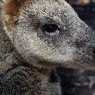 Kangaroo by Pascal and Isabella Inard