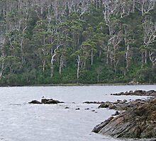 Walpole-Nornalup Inlet by Rick Playle