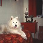 our beautiful Jascha (Samoyed) by BronReid