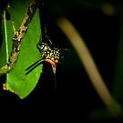 An undocumented arachnid, to my knowledge... by Saikat Babin Biswas