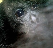 Baby Monkey by amylw1