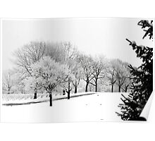 Hoar Frost on Trees Poster