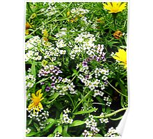 White, Lavender and Yellow Wild Flowers Poster