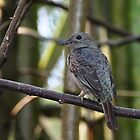 Small Bird by streetraven