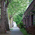 Tree Lined Street by JeanMCarlos