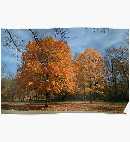 Colours of Fall Poster