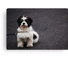 Black and white cookie Canvas Print