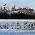 Winter Landscape- Keene Ontario Canada by Tracy Wazny