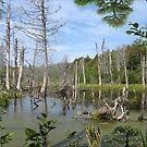 1549-XL-My Swamp Sweet Swamp by George W Banks