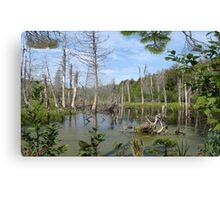 1549-XL-My Swamp Sweet Swamp Canvas Print