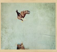 Bald Eagle by golfnut10