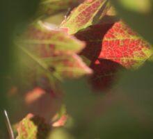 Maple red Sticker