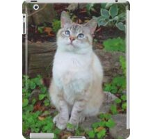 Cute, Soft & Cuddly Blue-Eyed Kitty iPad Case/Skin