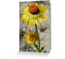 Everlasting Daisy Greeting Card