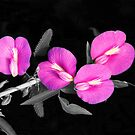 Gulf coast flower..... by DaveHrusecky