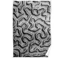 Brain Coral Pattern Poster