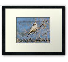 Vermilion Flycatcher (Leucistic) ~ Rare Framed Print