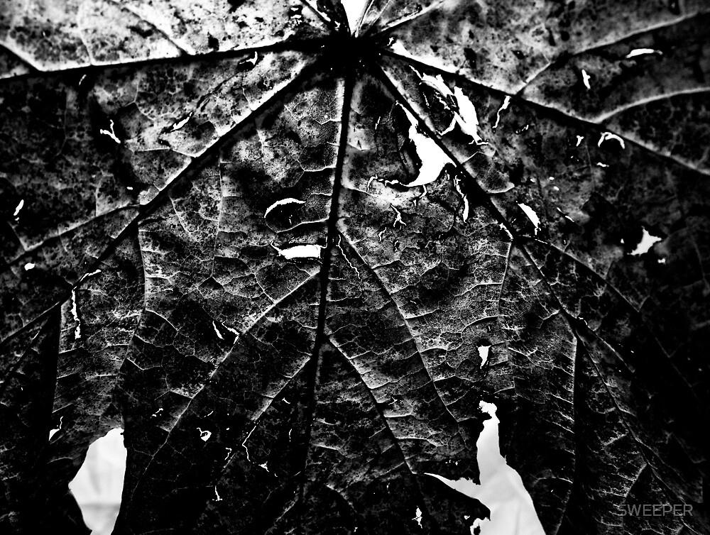 Decaying leaf by SWEEPER