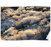 Ice crystals growing on the rock Poster