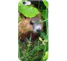 Cute Shy Peek a Boo Baby Groundhog  iPhone Case/Skin