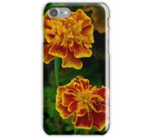 Marigolds by sunset iPhone Case/Skin