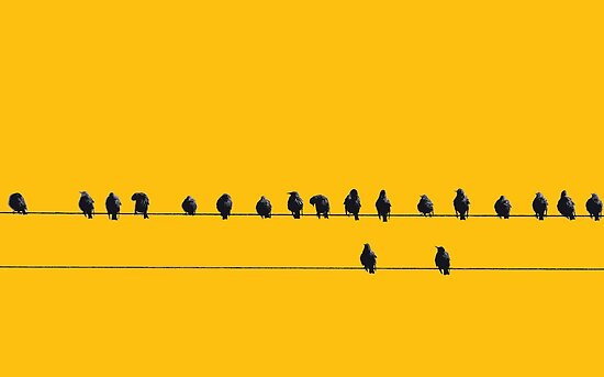 Birds on a Wire by mattslinn