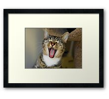 Mama Mia! A Tail of Three Kitties- Part 2 Framed Print