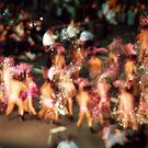 Sydney Gay and Lesbian Mardi Gras Parade 1996 by John Douglas