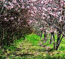Spring.....2009......Idaho by trueblvr
