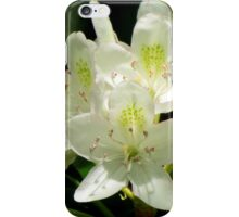 American Rhododendron iPhone Case/Skin