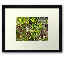 A simple tangle of undergrowth... Framed Print