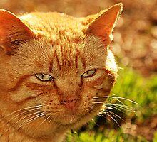 Red the Cat by georgiaart1974