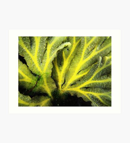 Seaweed series!... Art Print