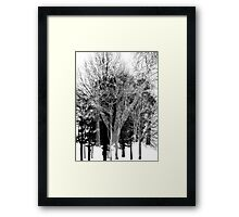 Gray-scale Forest Framed Print