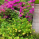 Tropical Garden by Nickolay Stanev