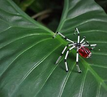 Garden Spider by JaninesWorld