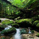Shallow Water 2 by Michael Treloar