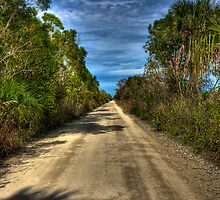 Everglades Road by Bill Wetmore