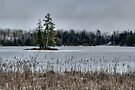 Little island in the winter by Allen Lucas