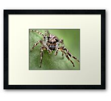 Little Terror Framed Print