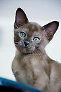 I am so cute! by Renee Hubbard Fine Art Photography