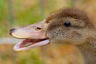 Quack! by Renee Hubbard Fine Art Photography