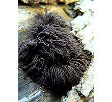 Stemonitis axifera II Photographic Print