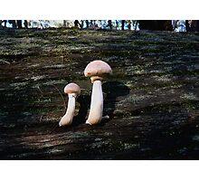 Big White Mushrooms Photographic Print