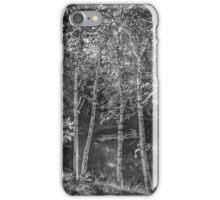 Birches iPhone Case/Skin
