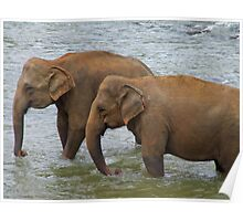 Elephants at Pinnawela, Sri Lanka Poster