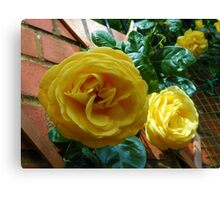 Golden Roses in June Canvas Print
