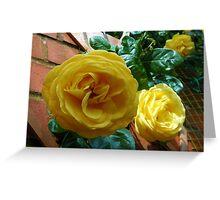 Golden Roses in June Greeting Card