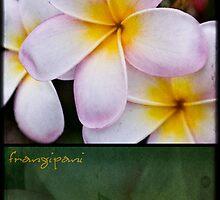 Frangipani - diptych by Adriana Glackin